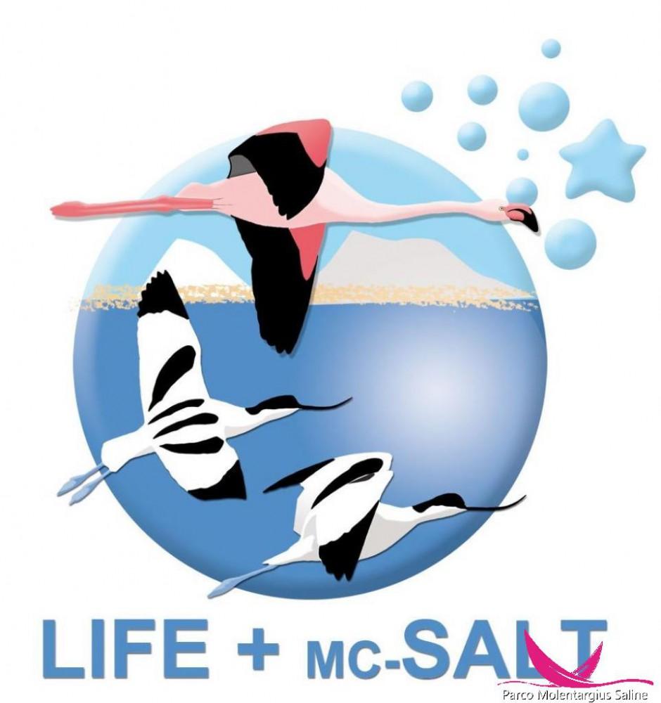 Progetto Mc Salt