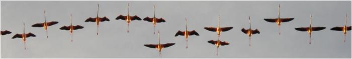 Croci volanti