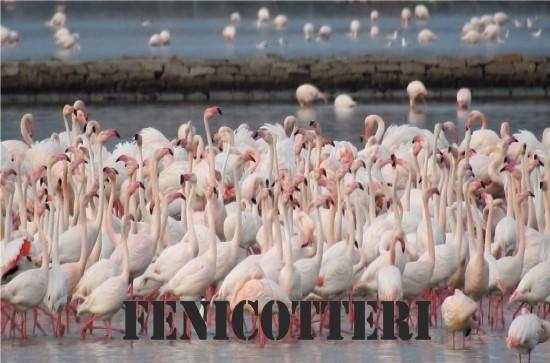 Link a galleria Fenicotteri